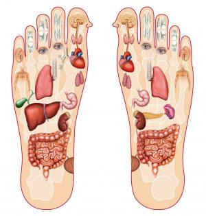 Organer på føttene