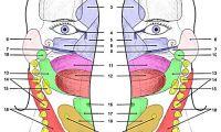 Profesjonell etterutdanning for soneterapeuter